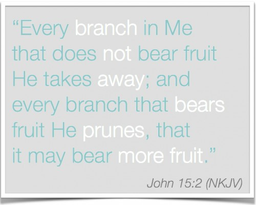 John 15:2 Pruning to become more fruitful | Inspired Haven